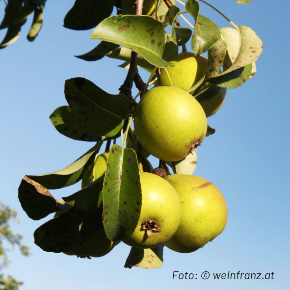 Wildbirnen Edelbrand (ca. 40% Alc.)